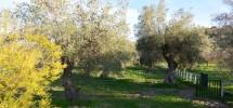 Casale Bochini 09
