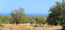 terreno-panoramico-c-da-petrara-noto-vendicari-barocco-mare-08