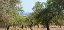 terreno-panoramico-c-da-petrara-noto-vendicari-barocco-mare-10