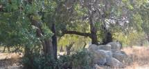terreno-panoramico-c-da-petrara-noto-vendicari-barocco-mare-12
