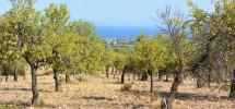 terreno-panoramico-c-da-petrara-noto-vendicari-barocco-mare-15