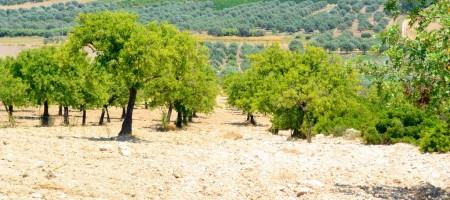 Terreno nel territorio del Val di Noto in c.da Misilini