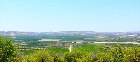 Terreno agricolo panoramico in c.da Agrippina – Rosolini