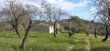 Antico casale Gioi 04