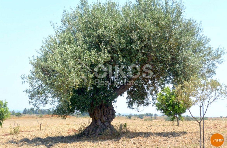 Terreno agricolo in contrada Carcicera- Rosolini
