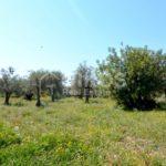 Terreno agricolo in contrada Ristallo Rosolini