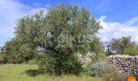 Terreno c.da Pantanello