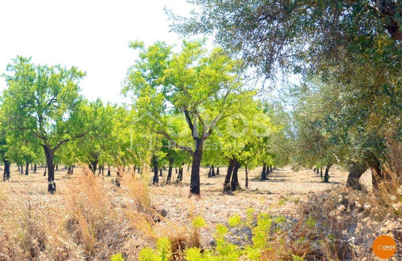 Terreno coltivabile cda Misilini Noto