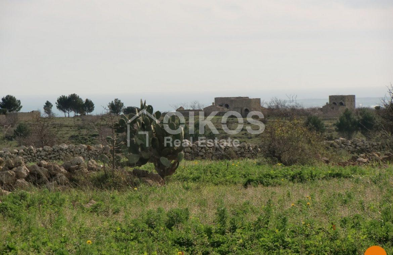 Terreno c da Oliva (1)