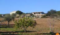 Terreno con casa in contrada Volpiglia 12