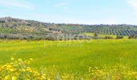 Terreno coltivabile e caseggiato 1