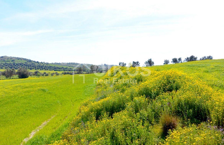 Terreno coltivabile e caseggiato 2