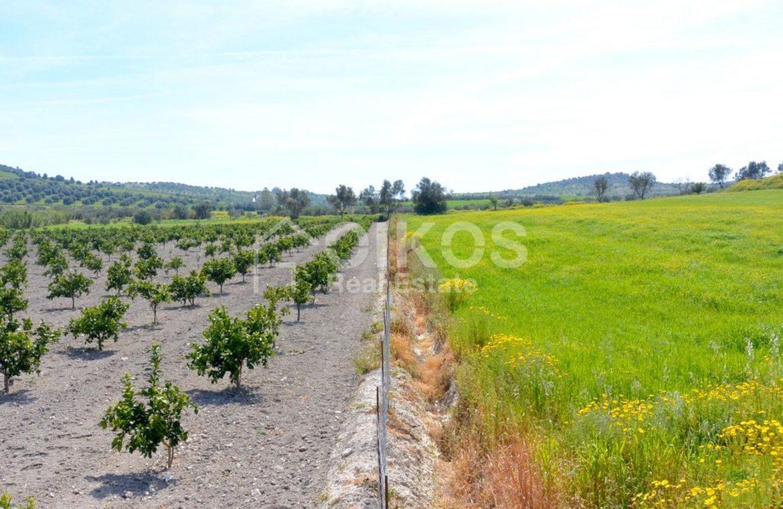 Terreno coltivabile e caseggiato 4