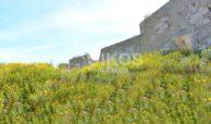Terreno coltivabile e caseggiato 7