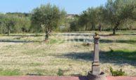 Casa in campagna con ampio giardino 6