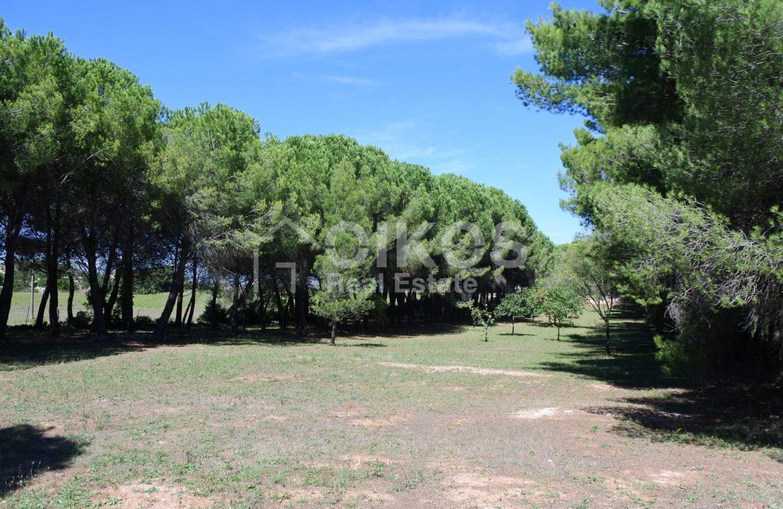 Villa con pineta e piscina (11)