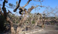 Antico casale siciliano in c da Rigolizia 12