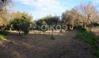 Casetta con terreno in contrada Gioi 03