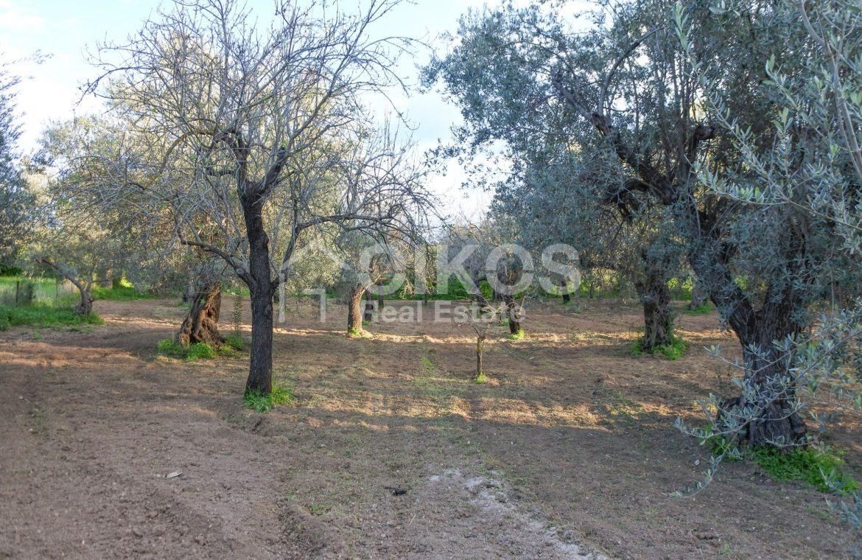 Casetta con terreno in contrada Gioi 06