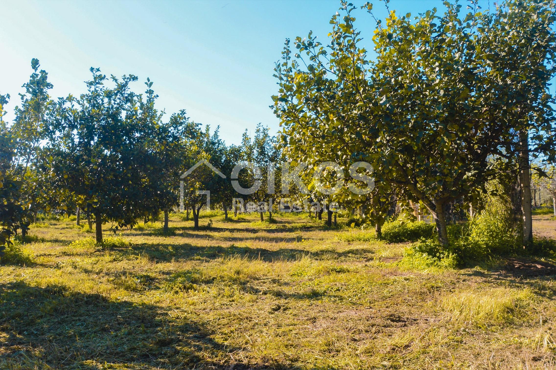 Terreno con progetto in c da Laufi 03