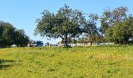 Terreno vista mare Vendicari (9)