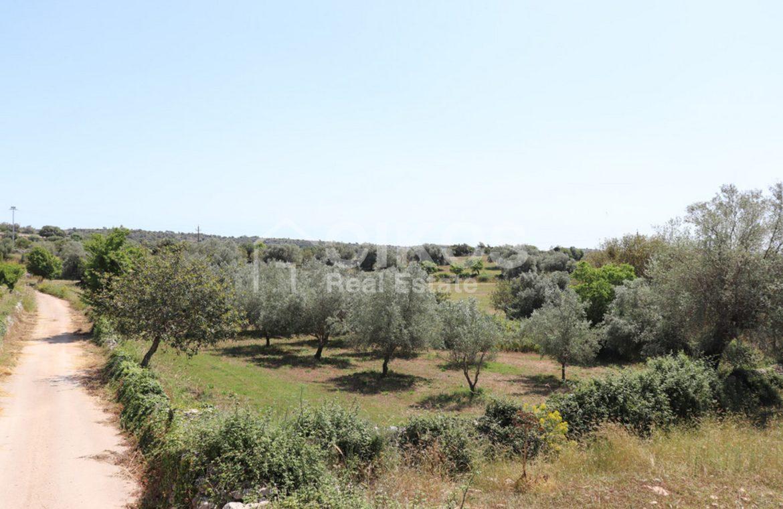 Villa Petracca (15)