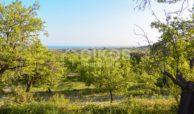 Terreno agricolo con vista mare in c da Mammanelli 02