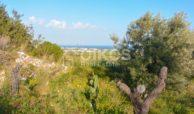 Terreno agricolo con vista mare in c da Mammanelli 03