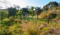 Terreno agricolo con vista mare in c da Mammanelli 04