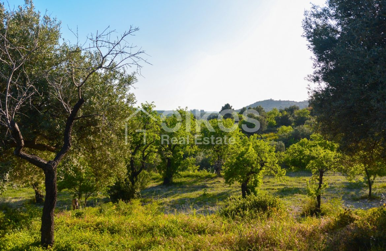 Terreno agricolo con vista mare in c da Mammanelli 05