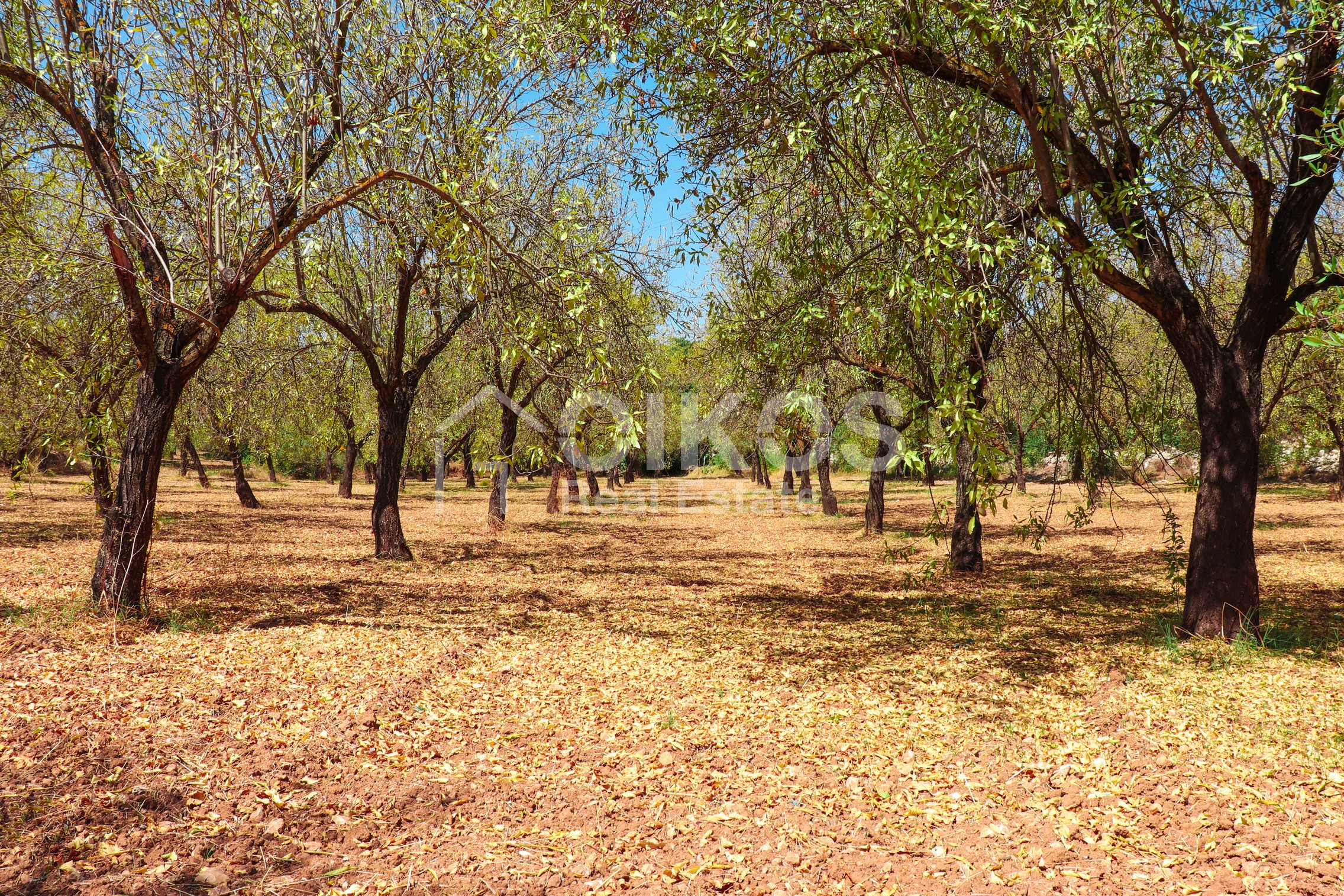 Terreno artigianale in contrada Zisola06