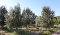 Villetta contrada Bochini08