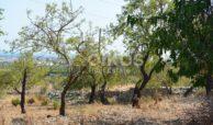 Terreno panoramico in c da Petrara 15