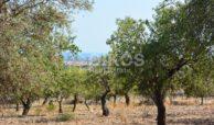 Terreno panoramico in c da Petrara 17