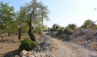 Terreno panoramico in c da Petrara 20