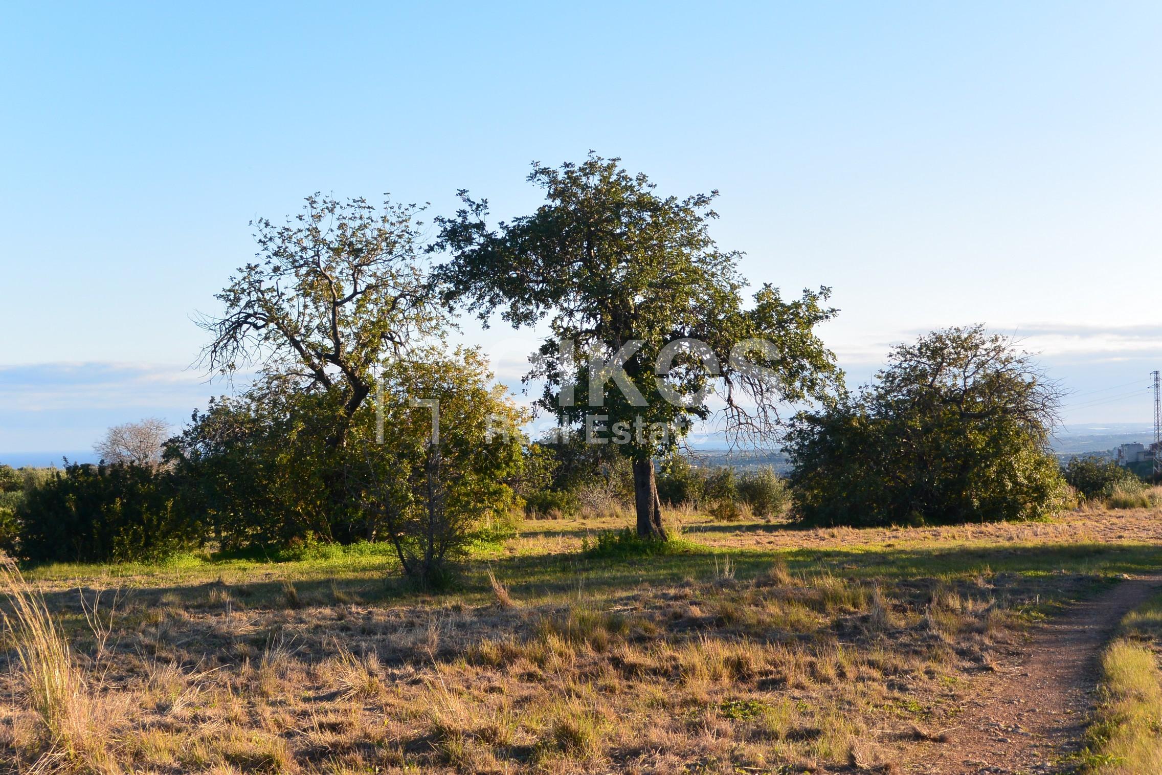 Terreno agricolo in c da Meti 01