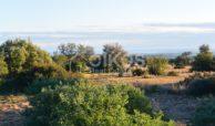 Terreno agricolo in c da Meti 09