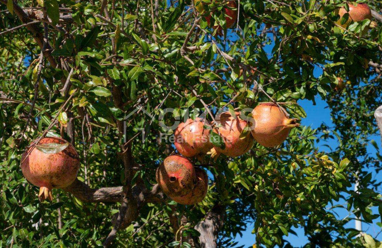 Agriturismo nella campagna iblea21