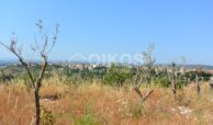 Terreno Meti vicino Noto5