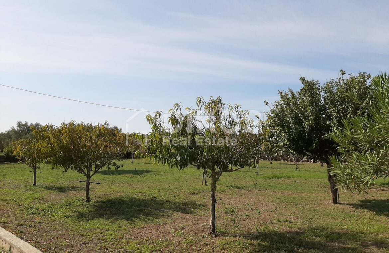 Villetta con terreno e ulivi14