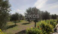 Villetta con terreno e ulivi15