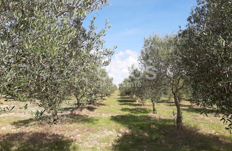 Villetta con terreno e ulivi26