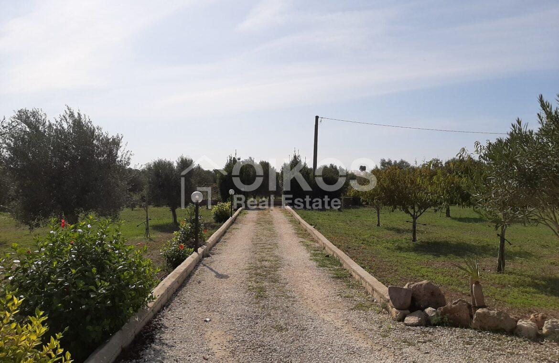 Villetta con terreno e ulivi24