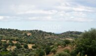 Terreno c da Saccollino1