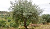 Terreno c da Saccollino12