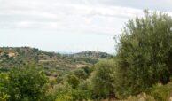 Terreno c da Saccollino2