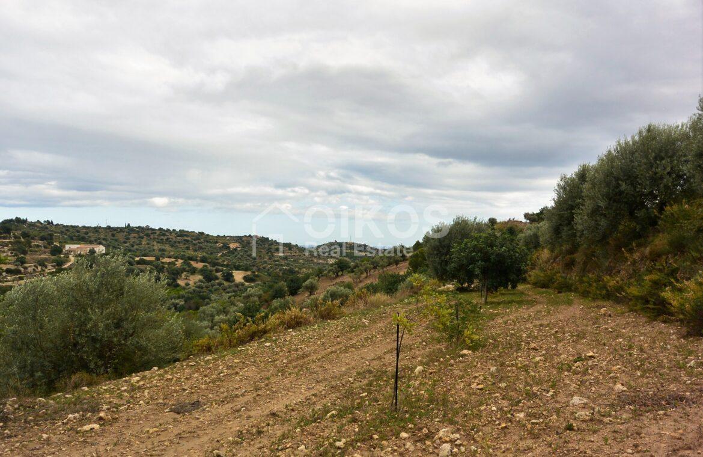 Terreno c da Saccollino3