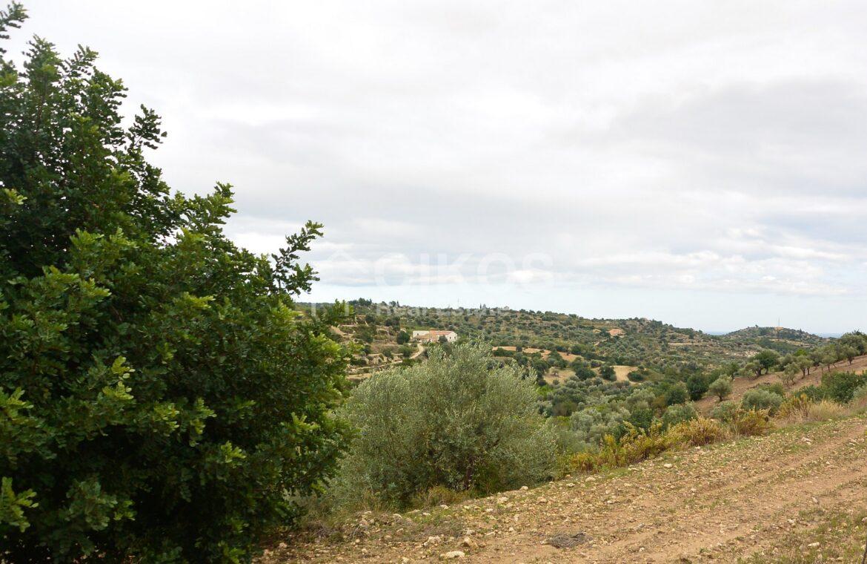 Terreno c da Saccollino4