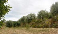 Terreno c da Saccollino5