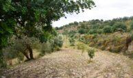 Terreno c da Saccollino6
